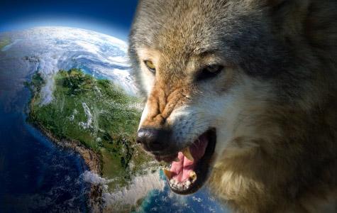 Collage, Lobo mostrando colmillos, Mundo de fondo